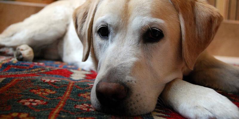 Carpet Odour Control by Blenheim Carpet Care