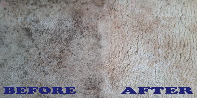 Carpet Steam Cleaning By Blenheim Carpet Care