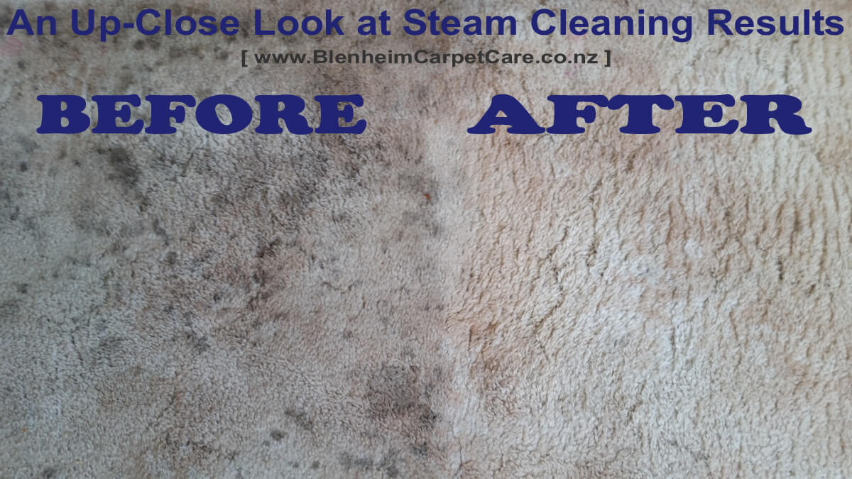 Steam Cleaning Before & After 2015-12-21 by Blenheim Carpet Care NZ